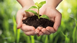 Plant in the hands as a symbol of sustainability