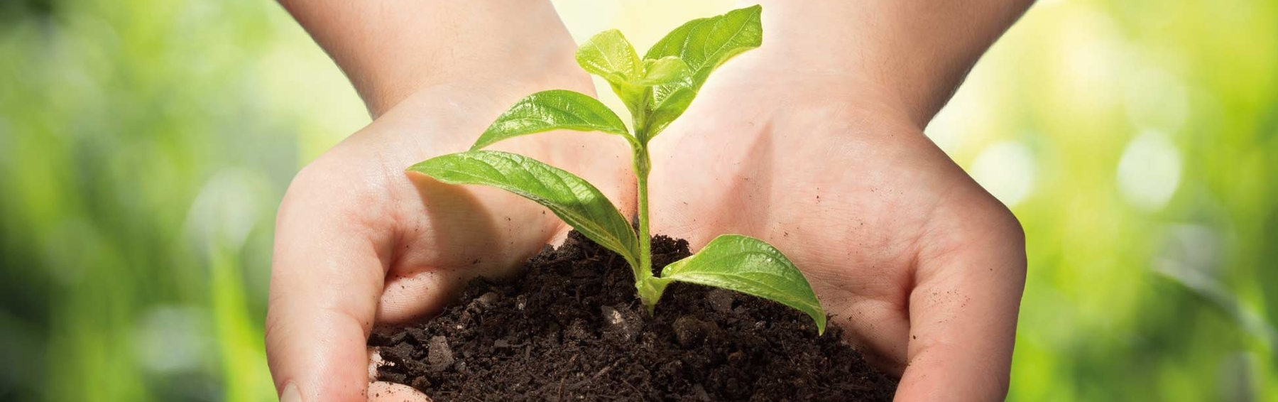 Plant seedling in the hand