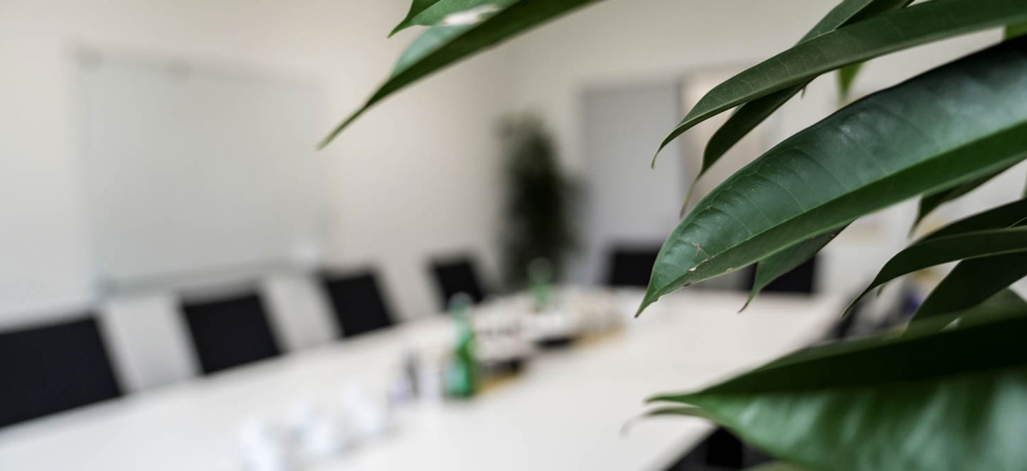 Plant in conference room as symbol for climate protection